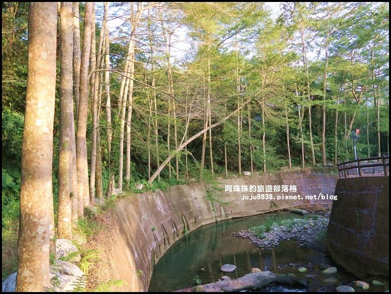 小葉欖仁秘境步道25.JPG