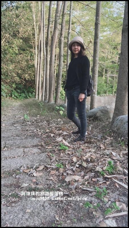 小葉欖仁秘境步道1.JPG