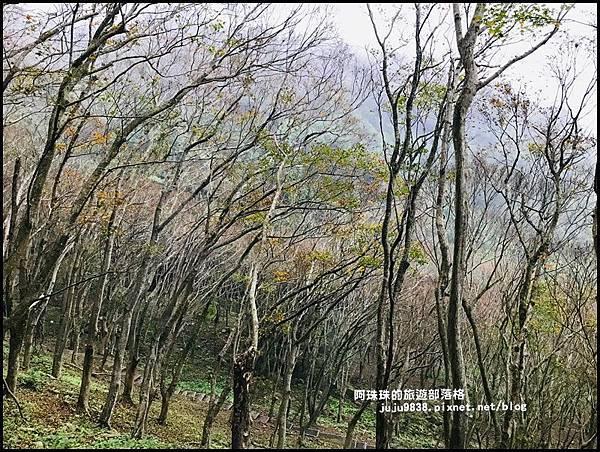 石門水庫楓紅3.JPG