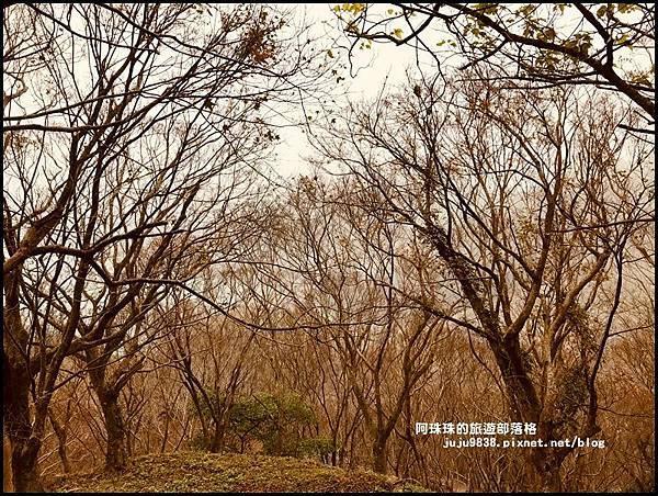 石門水庫楓紅2.JPG