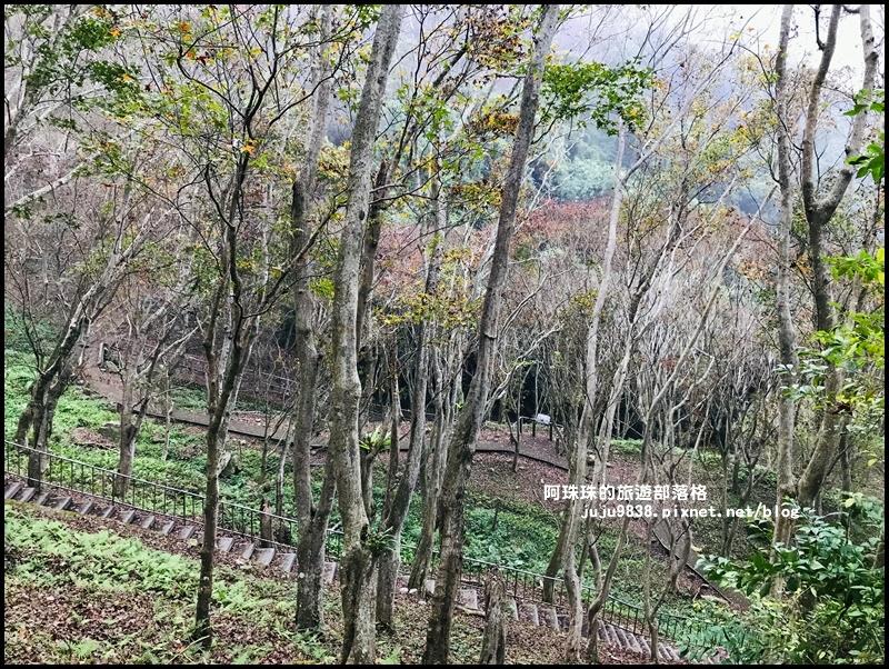 石門水庫楓紅10.JPG