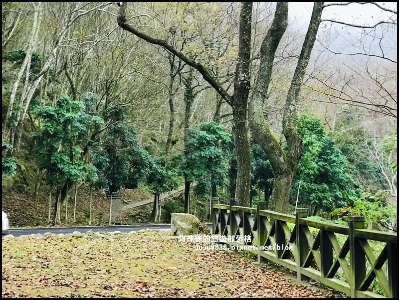 石門水庫楓紅15.JPG