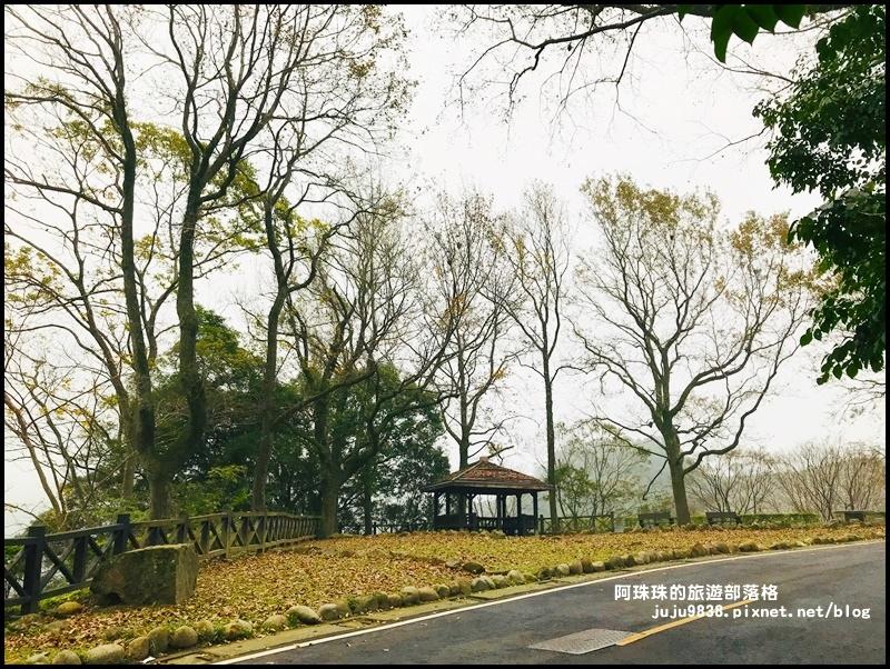 石門水庫楓紅25.JPG