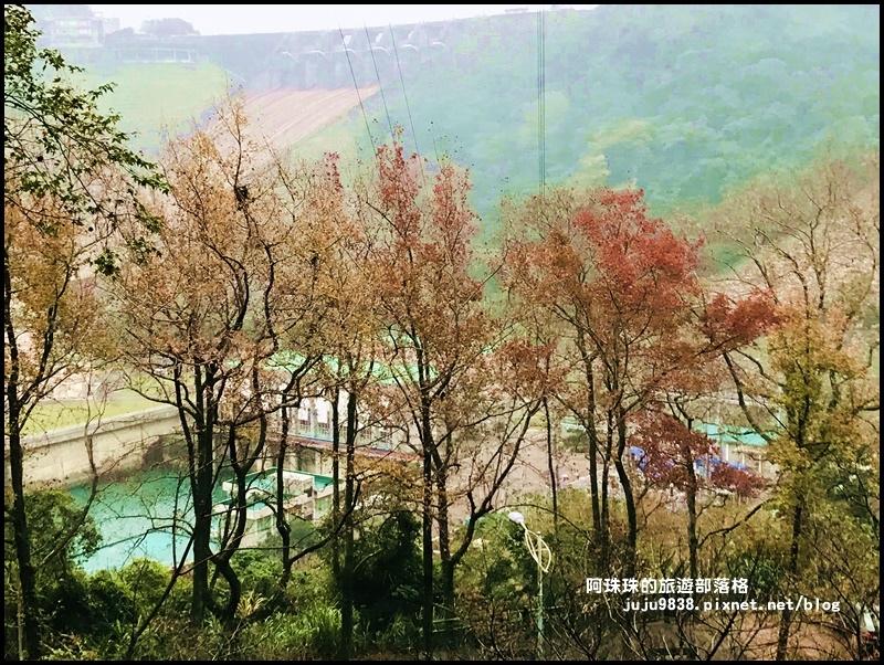 石門水庫楓紅37.JPG