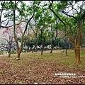 石門水庫楓紅49.JPG