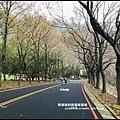 石門水庫楓紅50.JPG