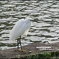 大湖公園9.JPG