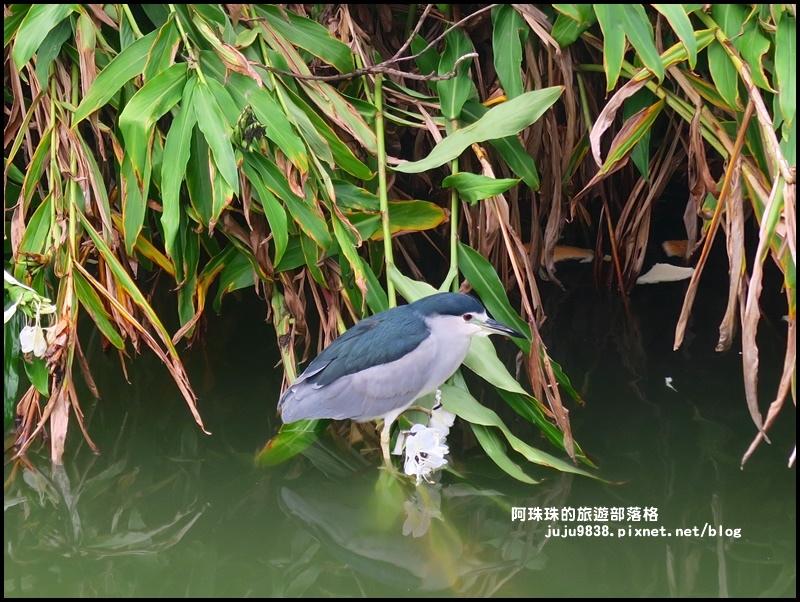 大湖公園2.JPG