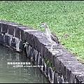 大湖公園34.JPG
