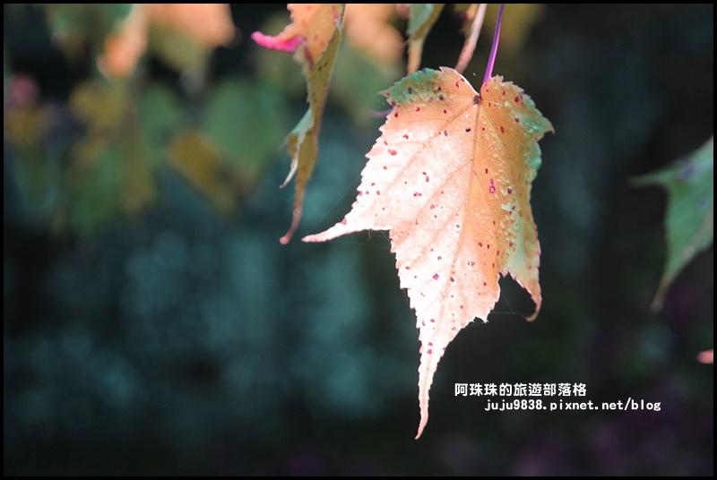 阿里山日出19.JPG