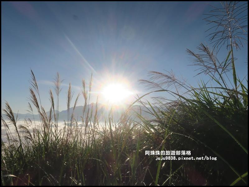 阿里山日出38.JPG