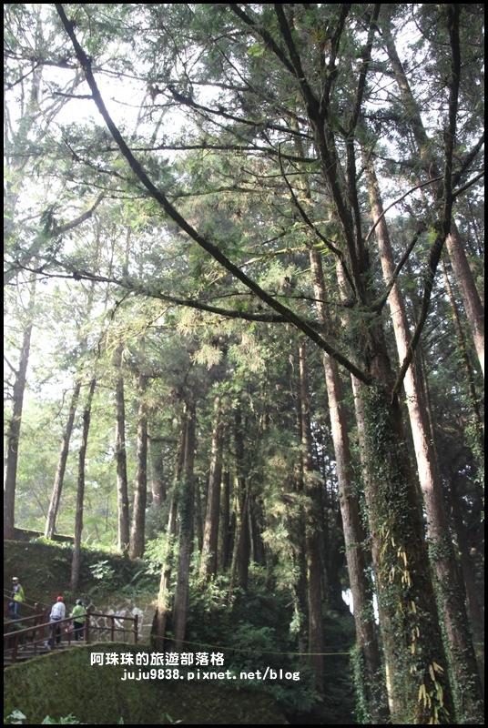 阿里山16.JPG