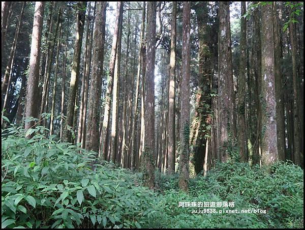 阿里山50.JPG
