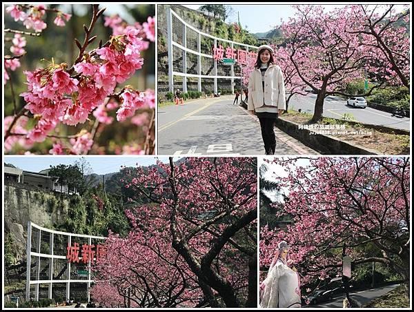 花園新城櫻花22.jpg
