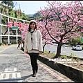 花園新城櫻花14.JPG