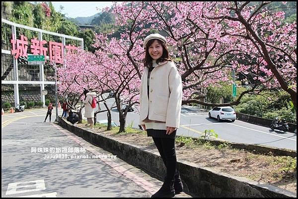 花園新城櫻花15.JPG