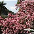 花園新城櫻花7.JPG
