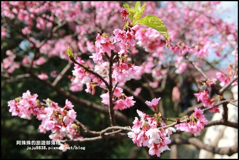 花園新城櫻花9.JPG