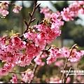 花園新城櫻花3.JPG