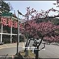 花園新城櫻花21.JPG