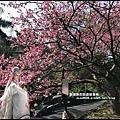 花園新城櫻花20.JPG