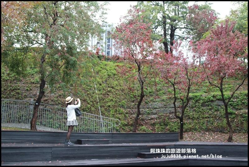 秋虹谷21.JPG