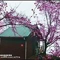 恩愛農場櫻花1.JPG