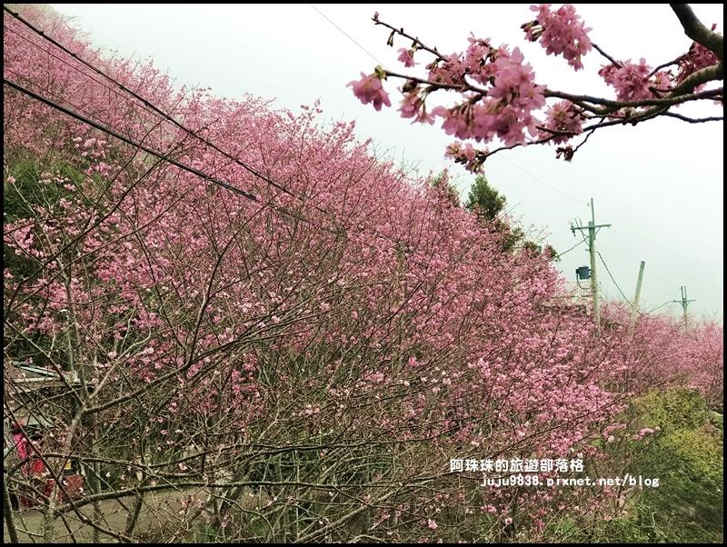 櫻木花道48.JPG