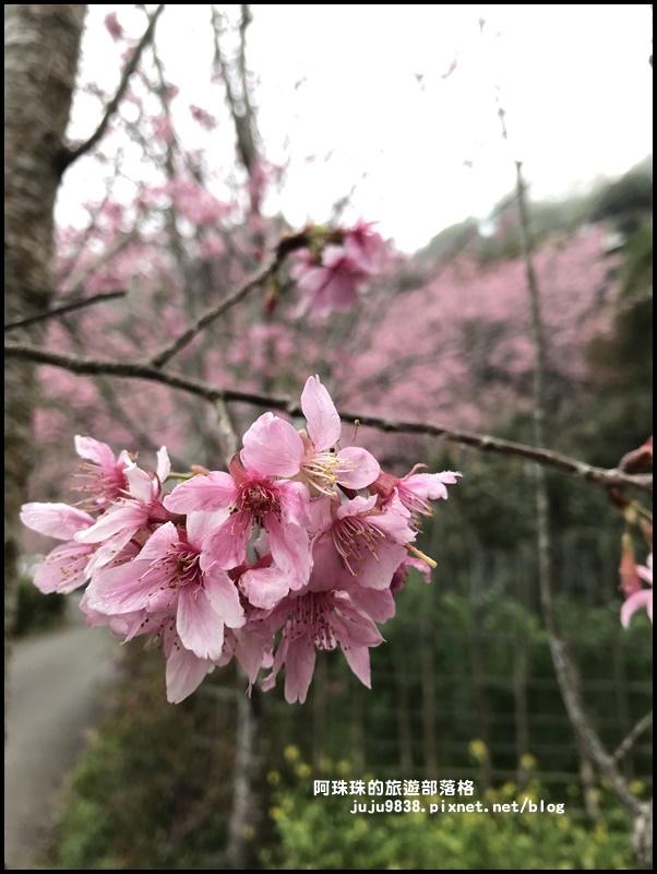 櫻木花道46.JPG