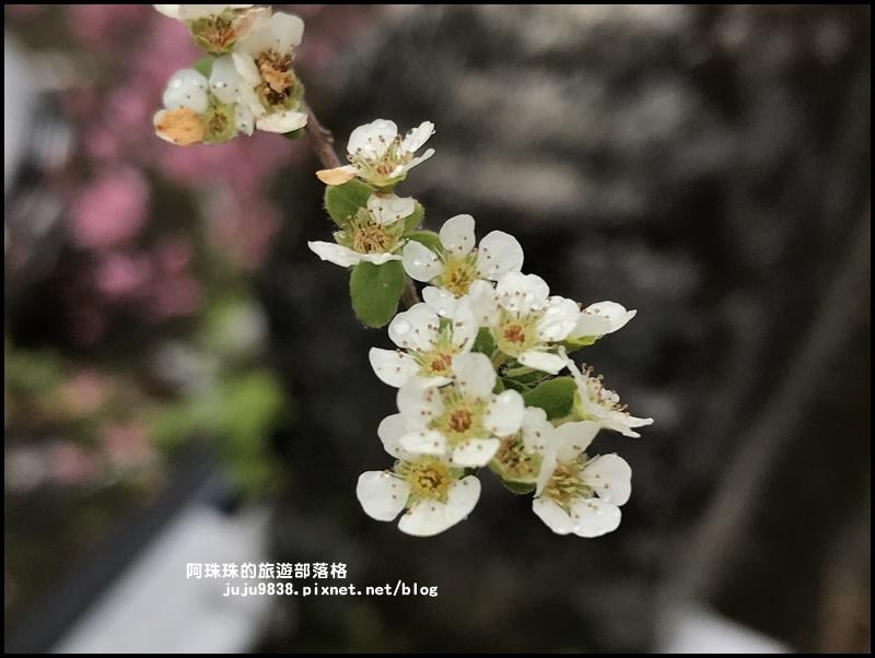 櫻木花道50.JPG