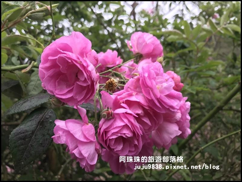 櫻木花道42.JPG