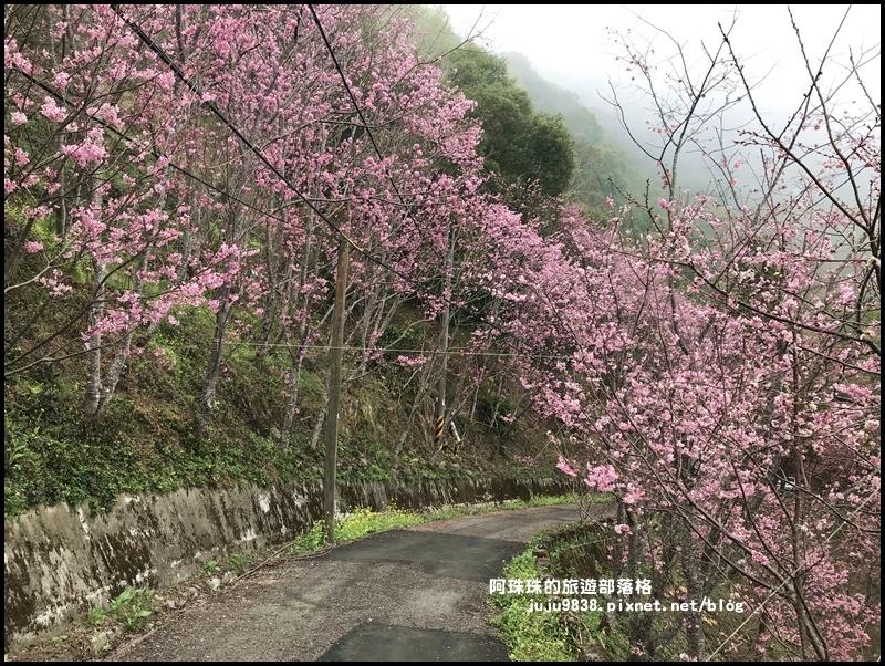 櫻木花道37.JPG