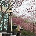櫻木花道32.JPG