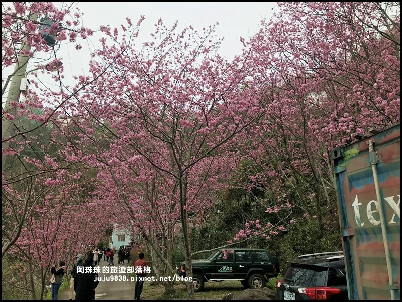 櫻木花道28.JPG