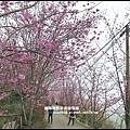 櫻木花道25.JPG