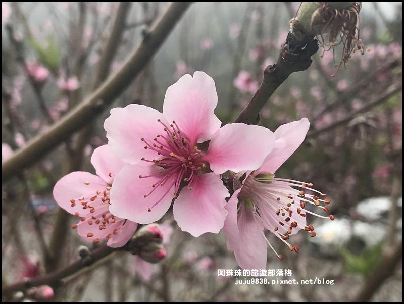 櫻木花道20.JPG