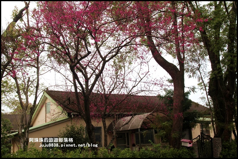 十一份日式宿舍群26.JPG