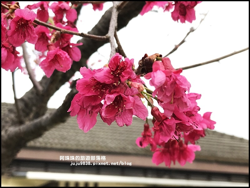 十一份日式宿舍群37.JPG