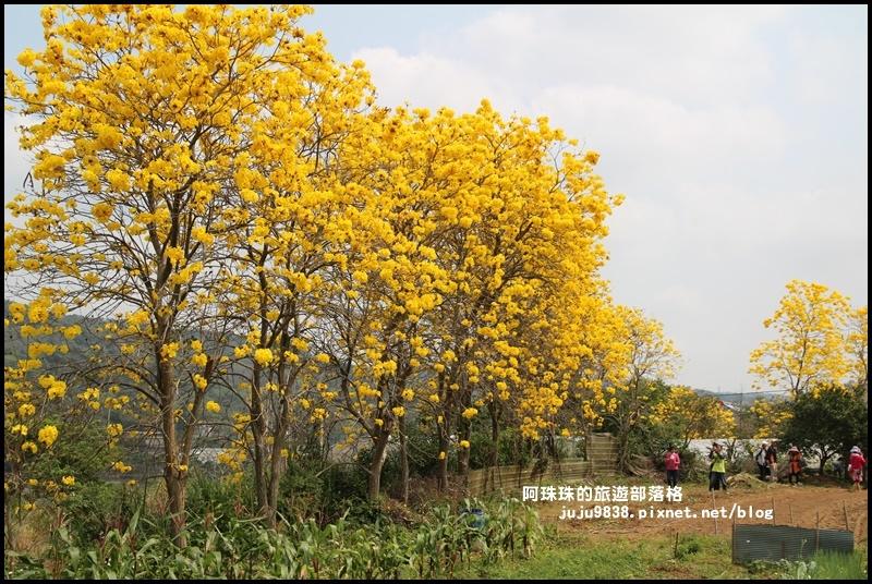 巨埔休閒農場7.JPG