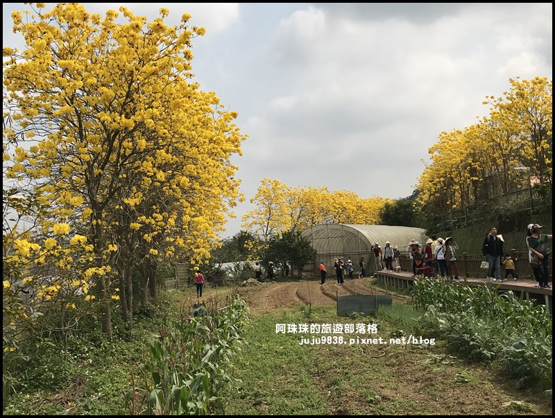 巨埔休閒農場24.JPG