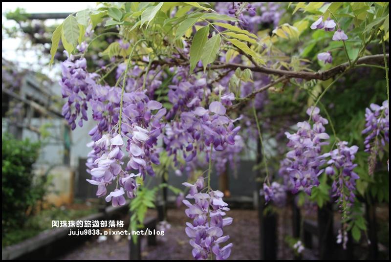 工二路紫藤花6.JPG
