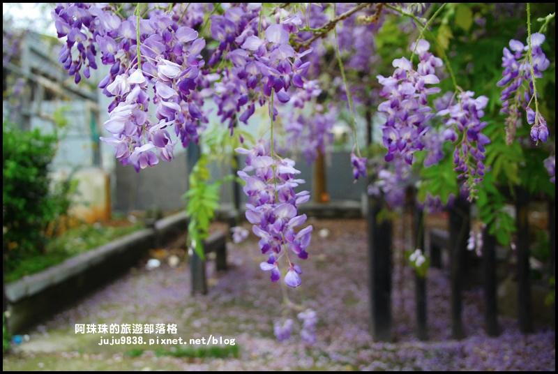 工二路紫藤花2.JPG