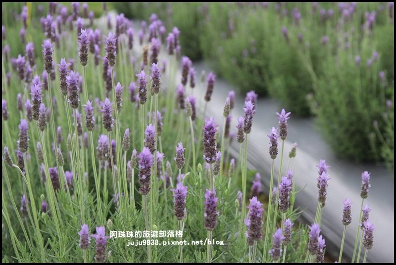 葛瑞絲香草花園17.JPG