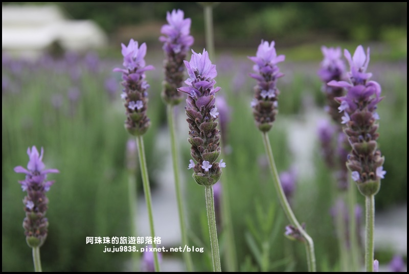 葛瑞絲香草花園6.JPG