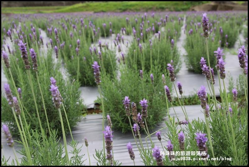 葛瑞絲香草花園5.JPG