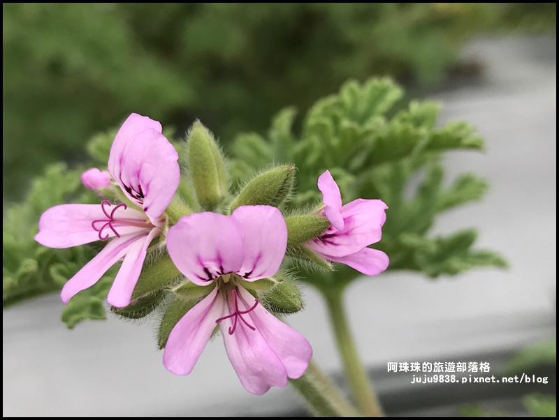 葛瑞絲香草花園34.JPG
