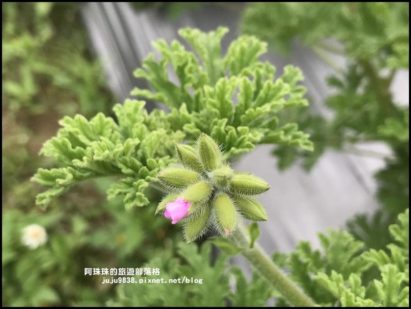 葛瑞絲香草花園35.JPG