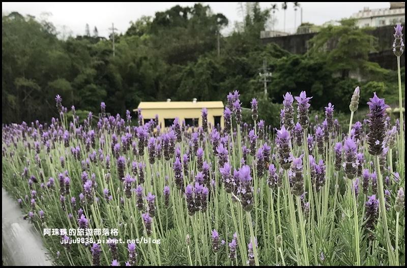 葛瑞絲香草花園31.JPG