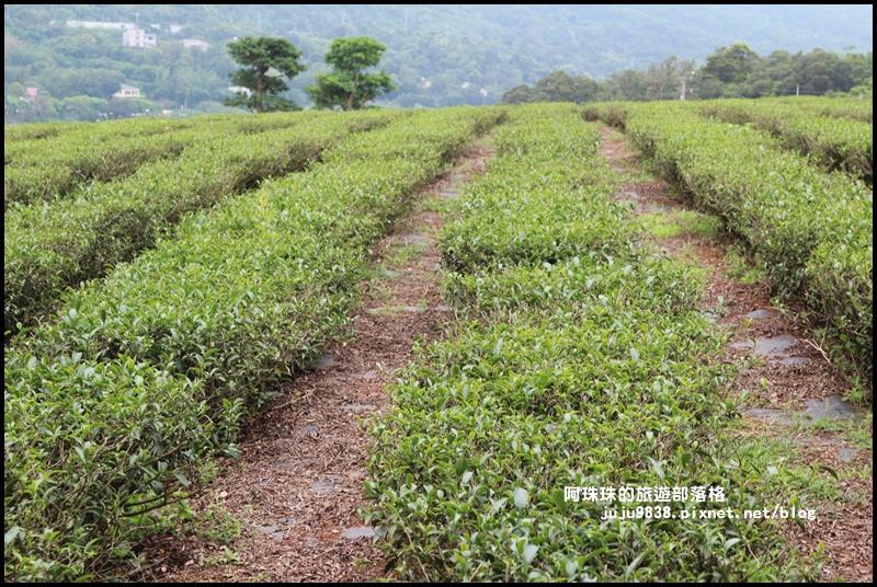 銅鑼茶廠33.JPG