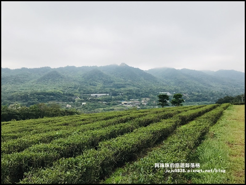 銅鑼茶廠41.JPG